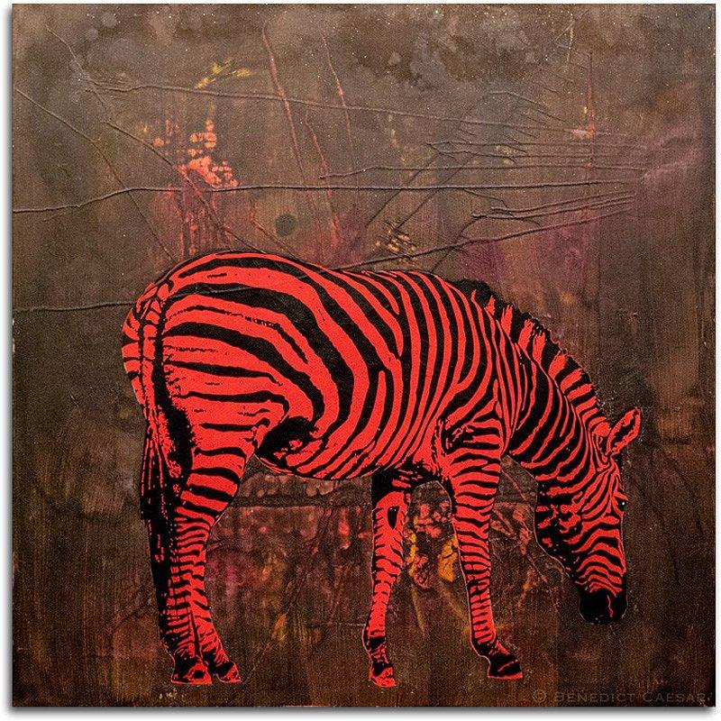 Kaki Zebra